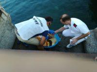 """Tartaruga """"Caretta Caretta"""" rischia di soffocare a Maratea con un filo di nylon. Salvata dai volontari"""