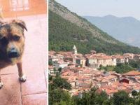 Cane crudelmente ucciso a Buonabitacolo con il veleno per lumache