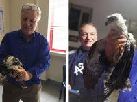Salvato a Sanza un raro esemplare di falco pecchiaiolo rimasto ferito ad un'ala