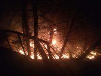 """Vasto incendio nella notte brucia la pineta di Contursi. Il sindaco Forlenza: """"È un atto scellerato"""""""