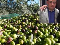 Danni al raccolto delle olive in provincia di Salerno. Christian Addesso scrive al Ministro Centinaio