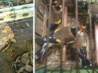 Maltrattamento di cani e detenzione di animali vietati. Serie di operazioni dell'Enpa Salerno e dell'Asl
