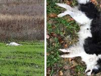 Cinque cani avvelenati in pochi giorni a Vietri di Potenza. Preoccupazione tra i cittadini
