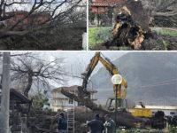 Forte vento sul Vallo di Diano. Le raffiche violente abbattono grosso albero a Teggiano
