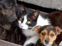 Cani e gatti randagi soppressi entro 5 giorni dalla raccolta. Impugnata legge della Regione Basilicata