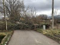 Forti raffiche di vento. Alberi abbattuti e disagi in Val d'Agri