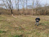Taglio abusivo di pioppi a Romagnano al Monte. Sequestrati 25 quintali di legna, denunciata una persona