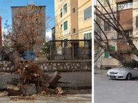 Maltempo a Salerno. Alberi abbattuti durante la notte a causa del forte vento