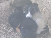 Cuccioli di cane abbandonati in campagna a Sassano. La denuncia dei cittadini