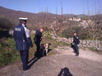 Cani ritrovati morti a Polla. Eseguita la bonifica della zona avvelenata