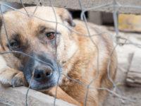 """Agropoli: domani incontro dell'iniziativa """"Adotta un cane"""" per sensibilizzare sui diritti degli animali"""