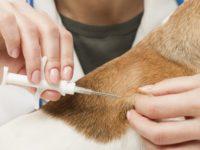 Sant'Arsenio: domani microchippatura gratuita dei cani ad opera dell'ASL