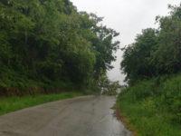 Maltempo. Albero abbattuto dal vento sulla ex S.S. 94 tra Salvitelle e Vietri di Potenza