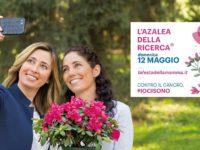 Domani l'Azalea della Ricerca di AIRC nelle piazze del Vallo di Diano per lottare contro il cancro