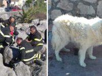 Cane incastrato tra gli scogli a Scario salvato grazie all'intervento dei Vigili del Fuoco