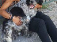 Smarrito cane a Prato Perillo di Teggiano. L'appello per ritrovare Buddy