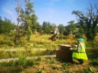 Liberati a Potenza due esemplari di falco pellegrino salvati dalla Polizia Municipale
