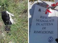 Teggiano: vitello morto abbandonato in un terreno di via Buco Vecchio. Ordinata la rimozione
