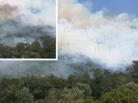 Vasto incendio nel territorio di Torre Orsaia. Vigili del Fuoco in azione