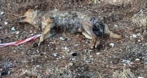 Sala Consilina: cane ritrovato senza vita e con le zampe legate ai bordi della strada
