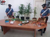 Sorpreso a coltivare cannabis nella propria abitazione a Potenza. In manette 45enne del posto