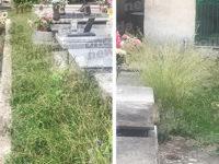 Cimitero invaso dalle erbacce ad Ispani. L'opposizione chiede la pulizia del luogo di culto