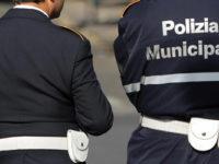 Sorpresi dalla Polizia Municipale a depredare alberi di pigne a Capaccio Paestum. Ladri in fuga