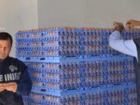 """Operazione """"Tuorlo"""". Sequestrate 26mila uova senza tracciabilità anche nel Salernitano"""