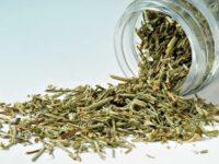 Farmacia 3.0 – la gemmoterapia per la gotta