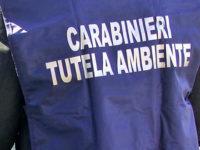 Buste in plastica non conformi alla legge in un negozio a Buccino. Multa salata per il titolare