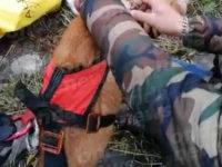 Cane precipita in un dirupo a Sant'Angelo a Fasanella. Salvato dai Vigili del Fuoco