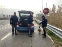Cane vaga nei pressi dello Svincolo di Vietri di Potenza. Salvato dalla Polizia Stradale