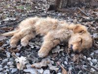 Cuccioli di pochi mesi abbandonati e lasciati morire. Triste ritrovamento a Montesano