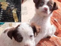 Sala Consilina: inquietanti episodi di avvelenamento di cani in località Santa Lucia