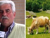 """Crisi del mercato lattiero-caseario. Catiello Gallo:""""Incontrerò il ministro Bellanova, urge un aiuto"""""""