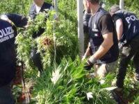 Spaccio di droga ad Eboli. La Polizia scopre piantagione di marijuana in un terreno a Campolongo