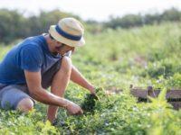 """""""La Regione Campania sblocchi i finanziamenti per i giovani agricoltori"""". La denuncia dei consiglieri del M5S"""
