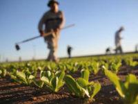 Campania. Oltre 49 milioni di euro di finanziamenti per imprese agricole e della pesca con il Fondo di garanzia