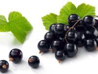 Farmacia 3.0 – olio di ribes nero e dermatite atopica