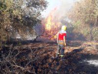 Agropoli: il sindaco Coppola firma l'ordinanza per la prevenzione e la lotta contro gli incendi
