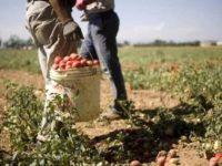 Richieste di manodopera nelle aziende agricole. Coldiretti Salerno invita a candidarsi