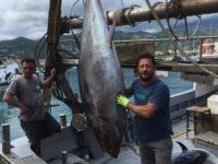 """""""Quote tonno"""", il sindaco di Sapri:""""I nostri pescatori potranno partecipare legalmente alla pesca"""""""
