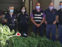 Trovata piantagione di marijuana a Persano. Scatta il sequestro, caccia ai responsabili
