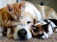 Sala Consilina:approvato in Consiglio comunale il Regolamento del benessere animale e contrasto al randagismo
