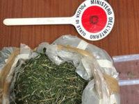 Nasconde in casa un sacco con foglie e steli di marijuana. Arrestato pregiudicato di Roccadaspide