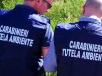 Sequestrata l'isola ecologica di Policastro Bussentino. Indagini dei Carabinieri in Municipio