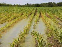 Maltempo. In Basilicata avviato monitoraggio per valutare i danni alle attività agricole