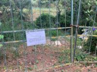 Trattamento illecito di rifiuti in un parco di Villammare. Sequestrata l'area, una denuncia