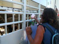 Attivisti vegani tornano in un macello di Atena Lucana per una protesta pacifica nel ricordo di Regan Russel