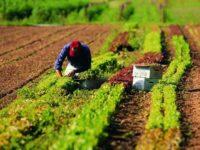 L'Inail stanzia 65 milioni di euro per micro e piccole imprese agricole. Al via il bando